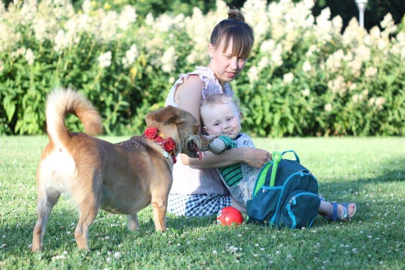 Familj med hunden i parkera på en solig dag modern rymmer barnet på hennes varv Pojkeblick på hunden royaltyfri fotografi