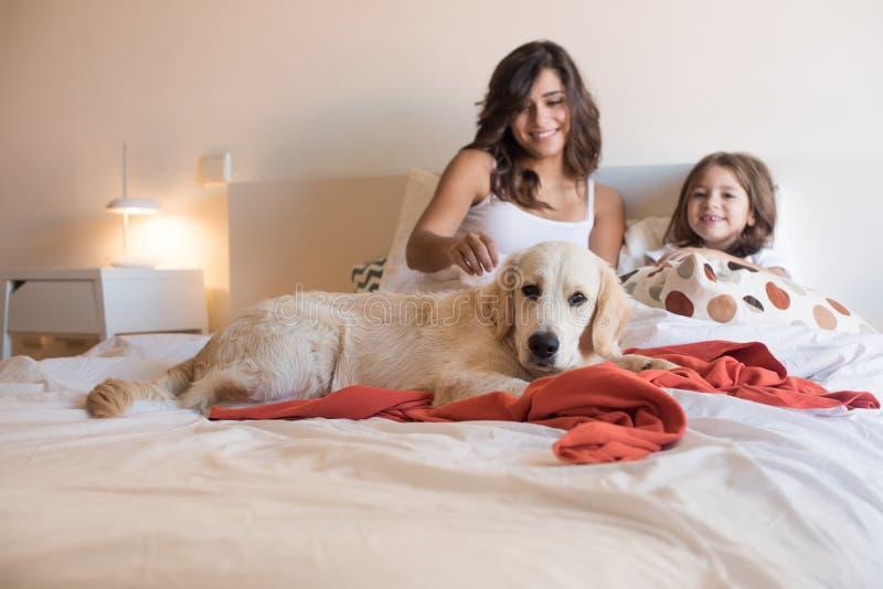 Familj med hunden i sängen arkivfoton