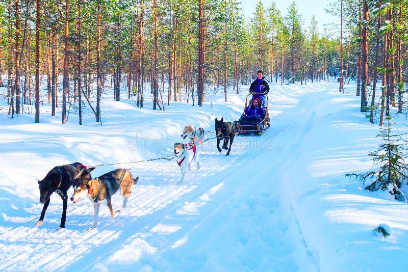 Familj på Husky Dogs Sled i Rovaniemi i Finland Lapland royaltyfri fotografi