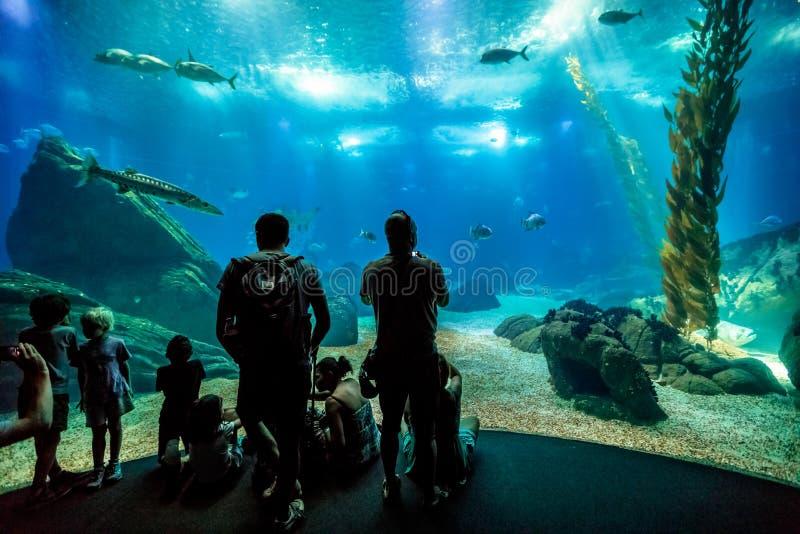 Familj på Lissabon Oceanarium royaltyfri bild