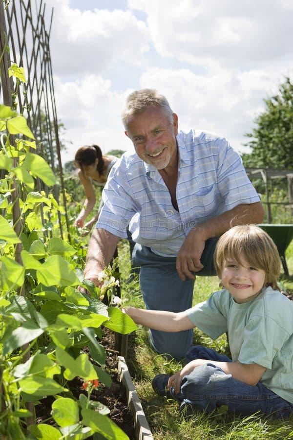 Familj som arbeta i trädgården i odlingslott arkivbild
