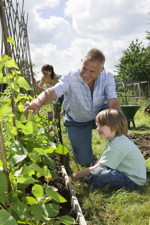 Familj som arbeta i trädgården i odlingslott royaltyfri fotografi