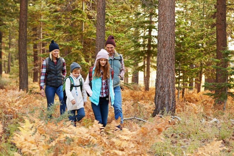 Familj som fotvandrar till och med skogen, Big Bear, Kalifornien, USA arkivbild
