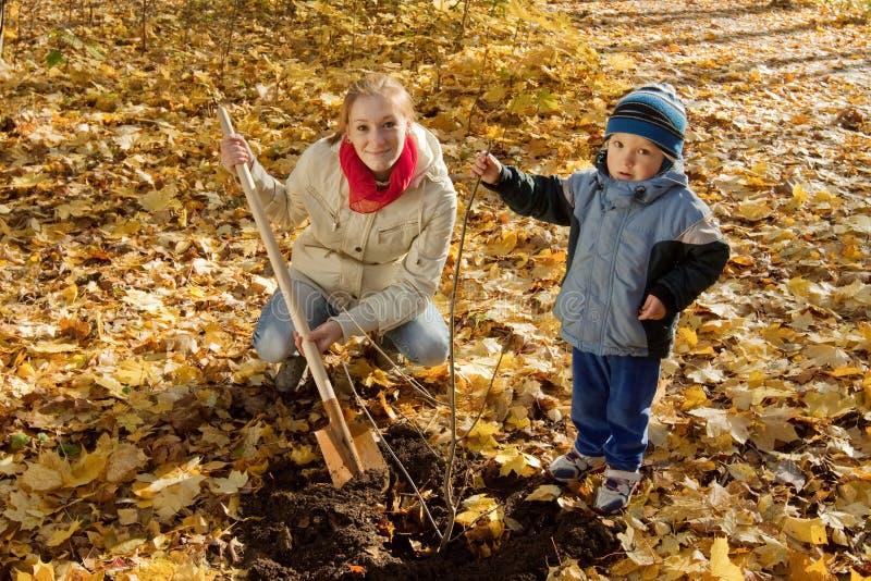Familj som planterar trädet i höst royaltyfri bild