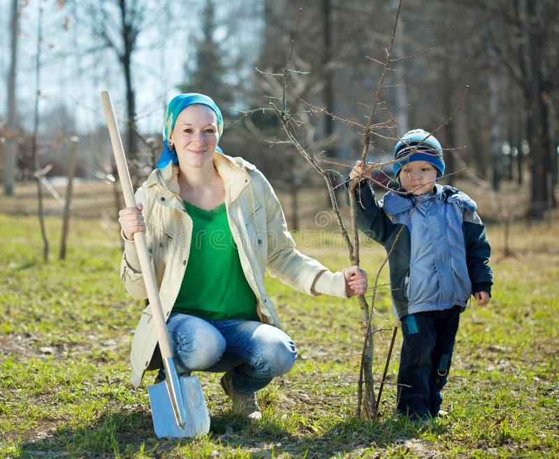 familj som planterar treen arkivfoto