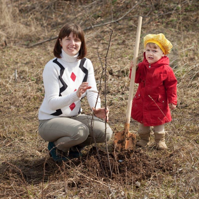 familj som planterar treen royaltyfria bilder