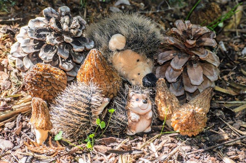 Familjen av igelkottar med sörjer kottar och champinjoner conicaen för svart Morel eller Morchella arkivfoto