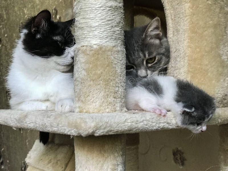 Familjen för katt` s på katthyllan royaltyfria foton