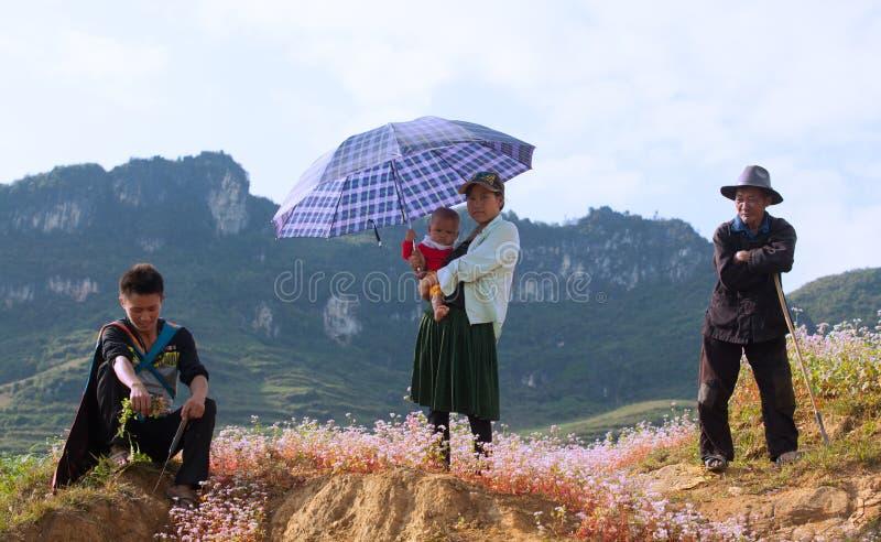 Familjen för vietnamesHmong minoritet som tar en vila på lilor, blommar arkivfoton