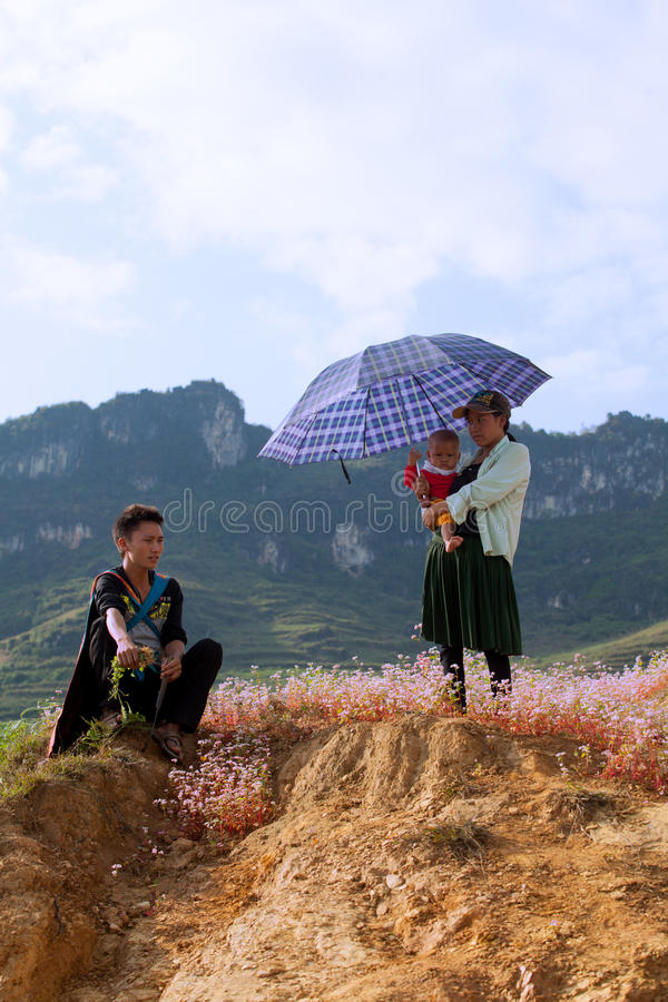 Familjen för vietnamesHmong minoritet som tar en vila på lilor, blommar royaltyfri bild
