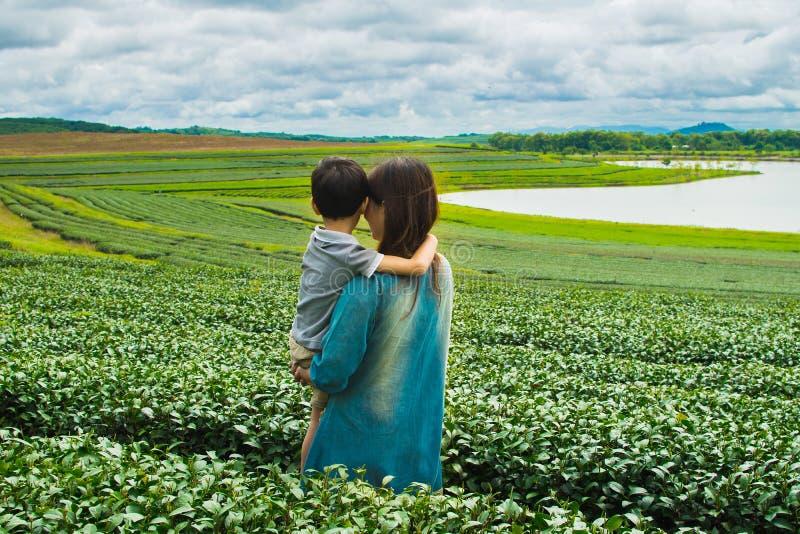 Familjen som ser teakolonin, sätter in arkivbild