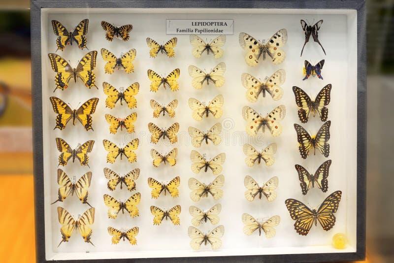 Familjer av fjärilar i ramen royaltyfria foton
