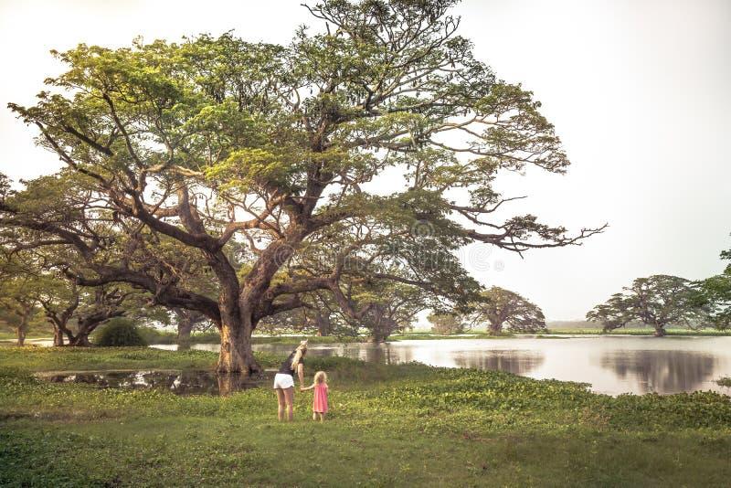 Familjhandelsresande moder och barndotter som undersöker den lösa naturreserven som ser på lösa slagträn Pteropus eller flygräven royaltyfri bild