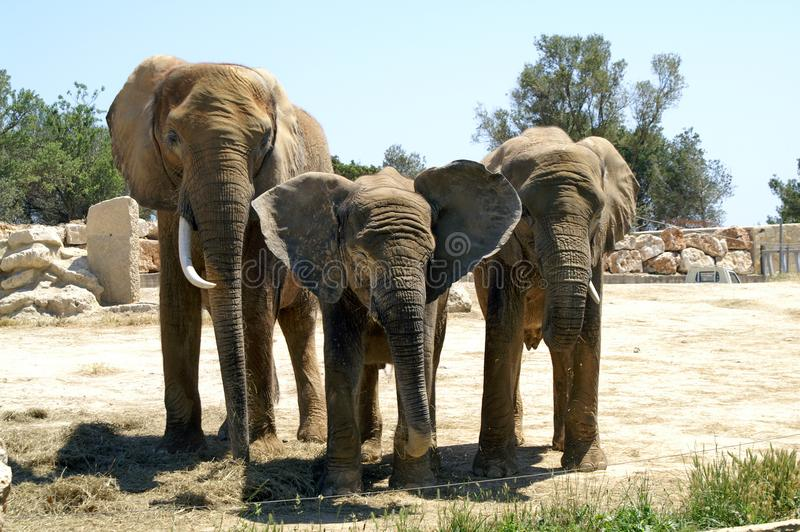 Familjstående på zoo arkivfoto
