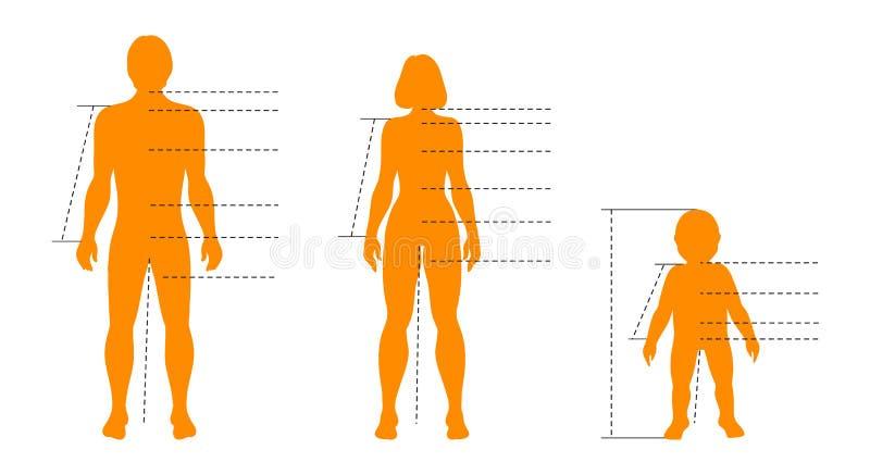 Familjuppsättning av människokroppar med pekare och indikatorer för läkarundersökning-, sport- och modeinfographics Vektor isoler vektor illustrationer
