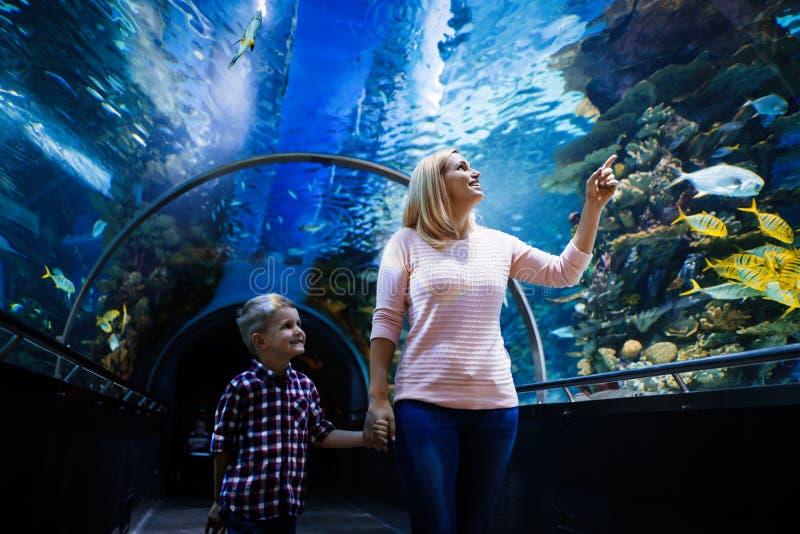 Familjwatchig fiskar på ett akvarium royaltyfria bilder