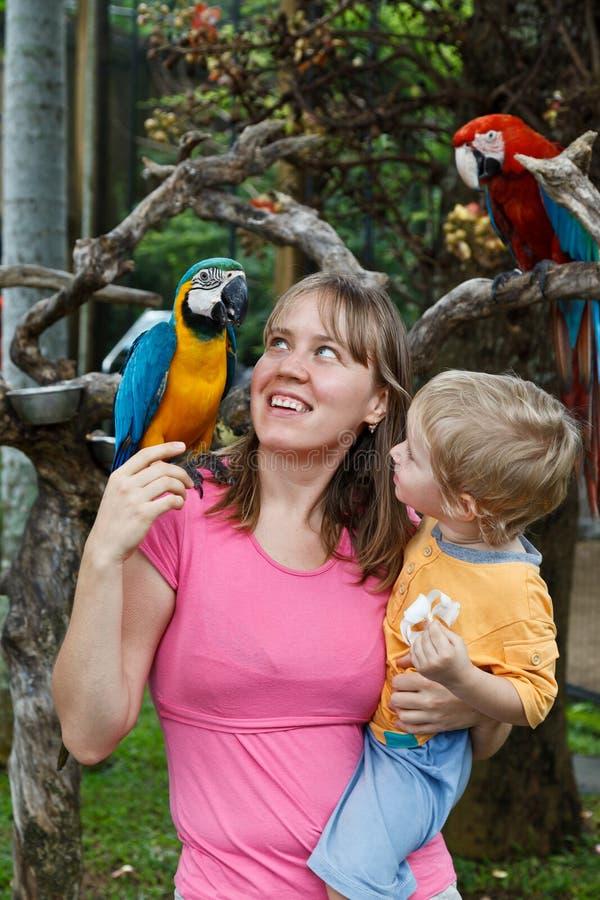 Famille avec des perroquets images stock