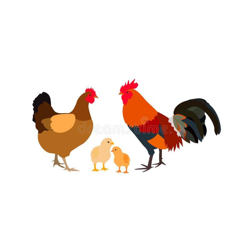 Famille blanche de ferme de coq de poulet photographie stock