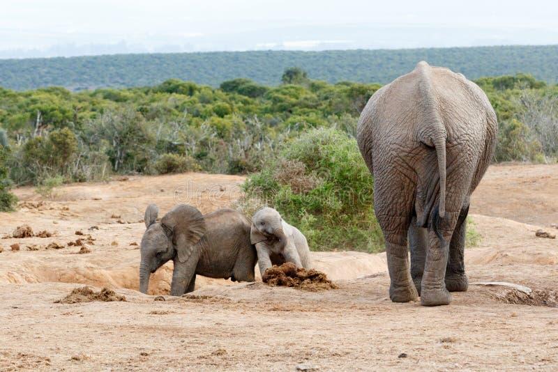 Download Famille D'éléphant De Bush D'Africain Image stock - Image du grand, course: 77162091