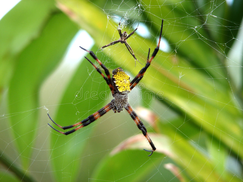 Famille d'araignée photo stock