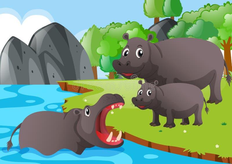Famille d'hippopotame en rivière illustration libre de droits