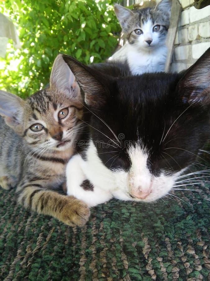 Famille de chat images stock