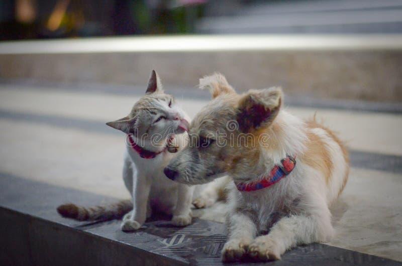 Famille de chat et de chien photographie stock libre de droits