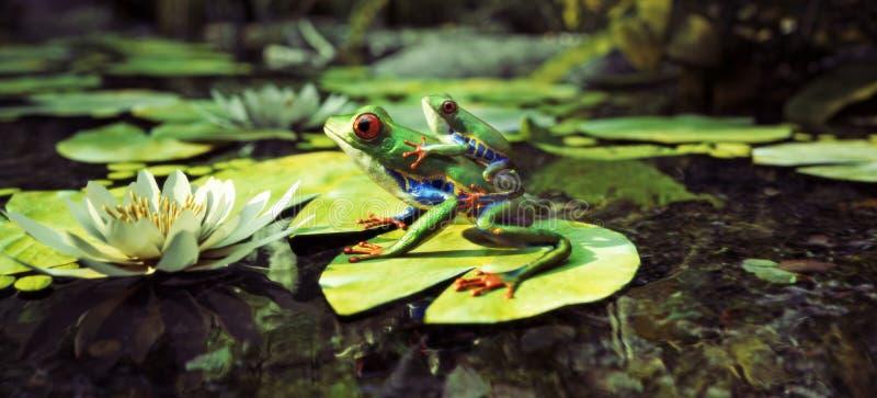 Famille de grenouille se reposant sur une protection de lis avec le dos de bébé dessus Direction, protection, sécurité, concept d images stock