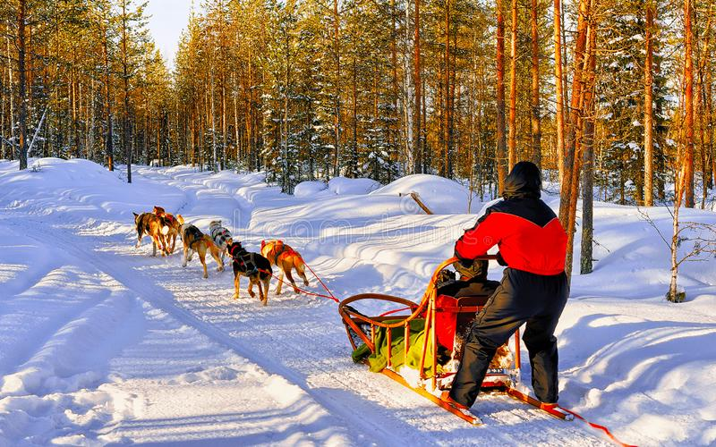 Famille de husky sleigh dans le réflexe de Laponie Finlande photo libre de droits