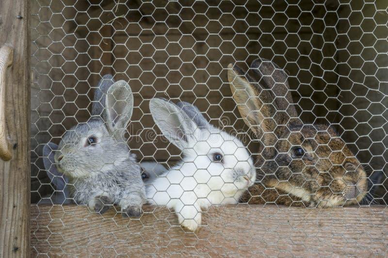 Famille de lapin dans la cage image stock