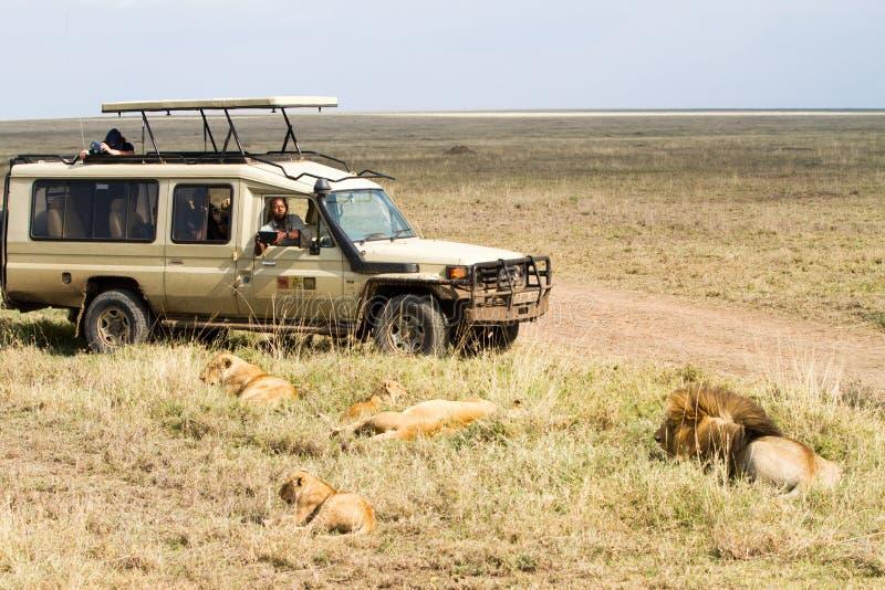 Famille de lion et voiture africaines est de safari photo libre de droits