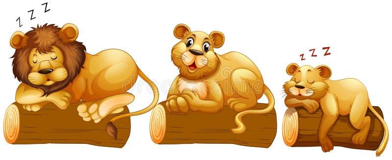 Famille de lion sur le rondin illustration stock