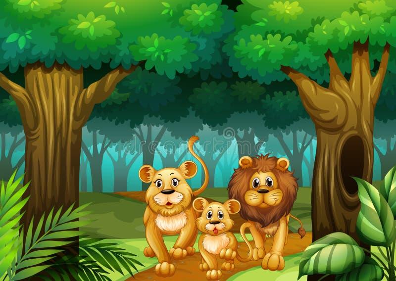 Famille de lion vivant dans la forêt illustration stock
