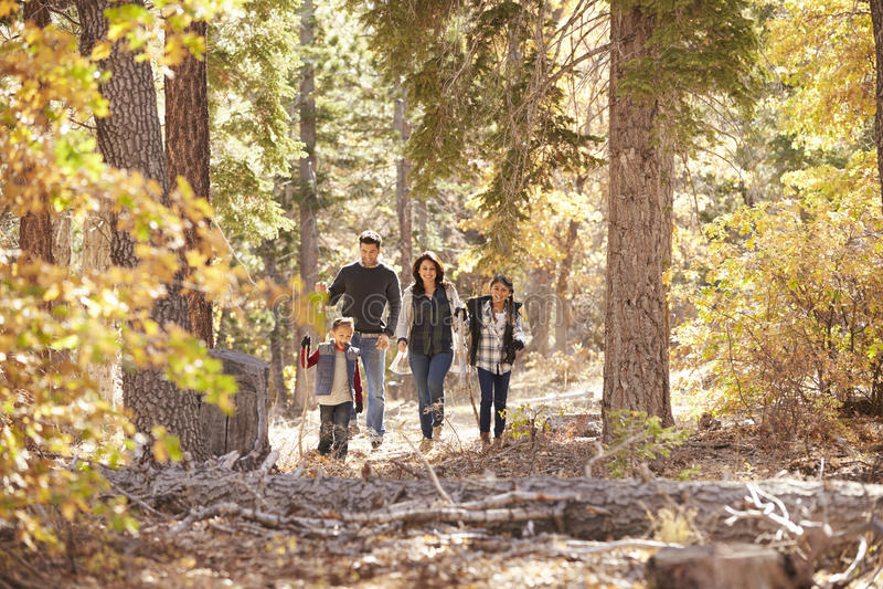 Famille de quatre hispanique marchant ensemble dans une forêt photo libre de droits