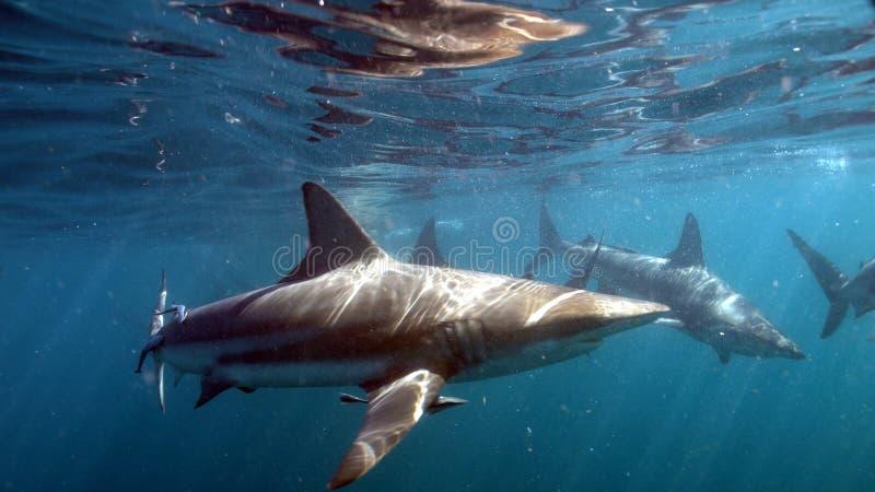 Famille de Sahark dans l'océan photographie stock libre de droits