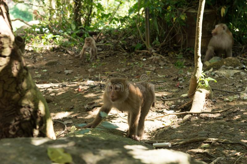 Famille de singe dans la jungle photos stock