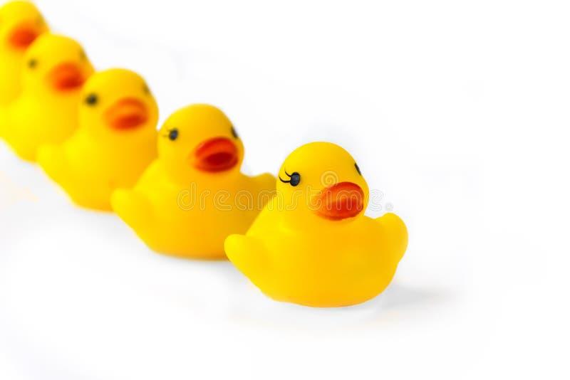 Famille en caoutchouc de canard photos stock
