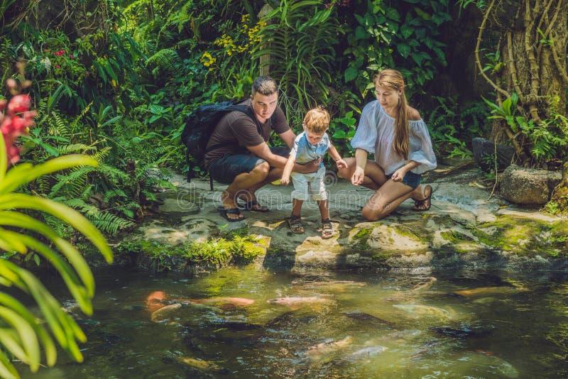 Famille heureuse alimentant le poisson-chat coloré dans l'étang tropical photos stock