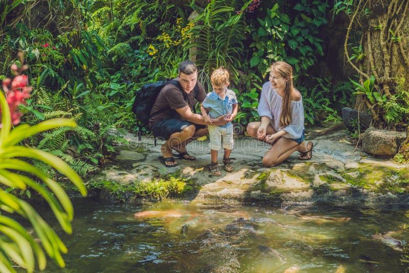 Famille heureuse alimentant le poisson-chat coloré dans l'étang tropical image stock
