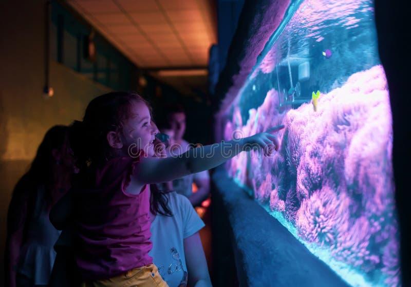 Famille heureuse regardant des poissons images stock