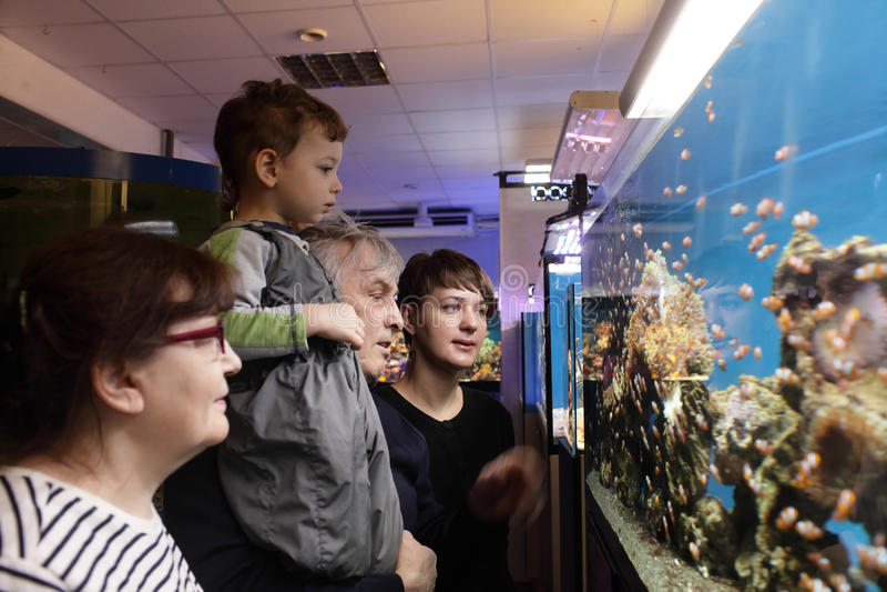 Famille regardant des poissons image libre de droits