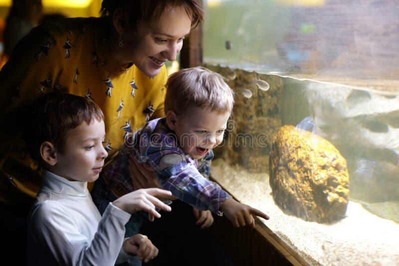 Famille regardant des poissons images libres de droits