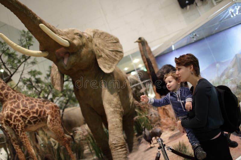 Famille regardant l'éléphant images libres de droits