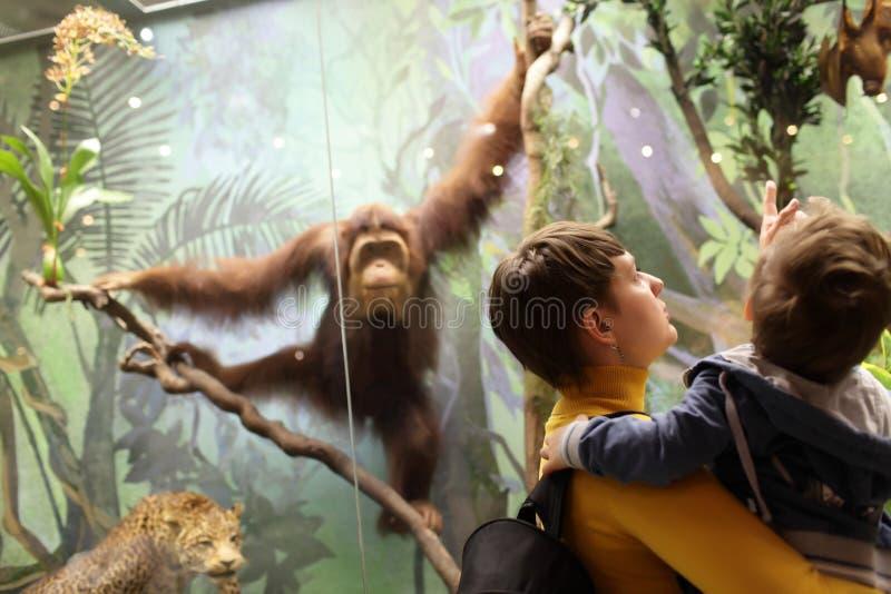 Famille regardant le singe photo stock
