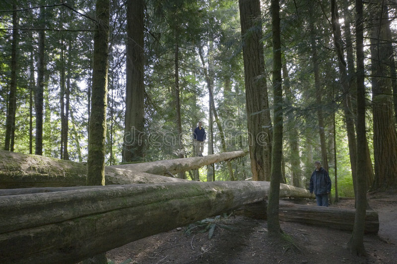 Download Family Balancing On Fallen Trees Stock Photo - Image: 8578298