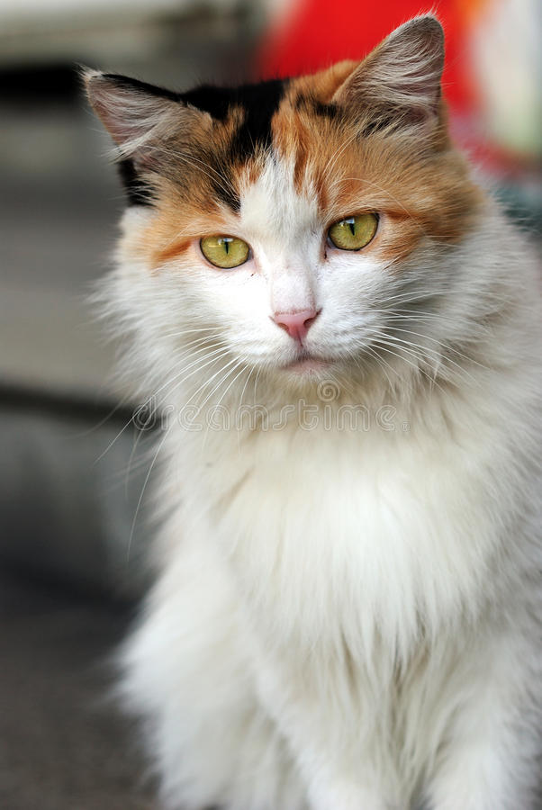 Family cat. This cat stared at me sitting sideway royalty free stock image