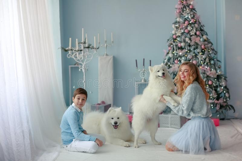 Family Christmas photo of mother and adult son with Pets purebred Samoyed stock photography