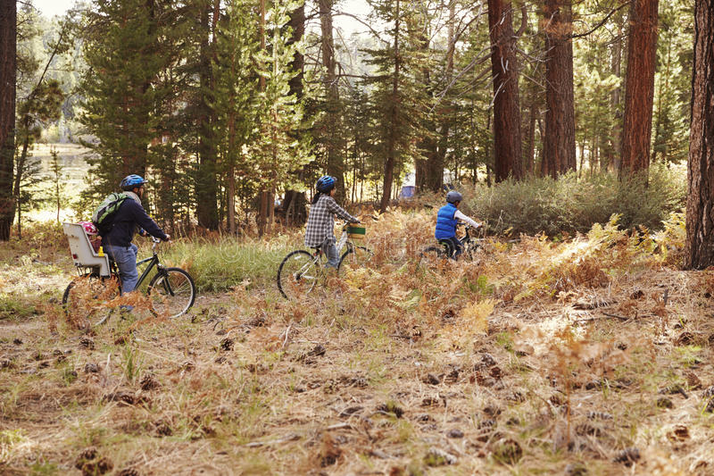 Family cycling through a forest together, side view royalty free stock images