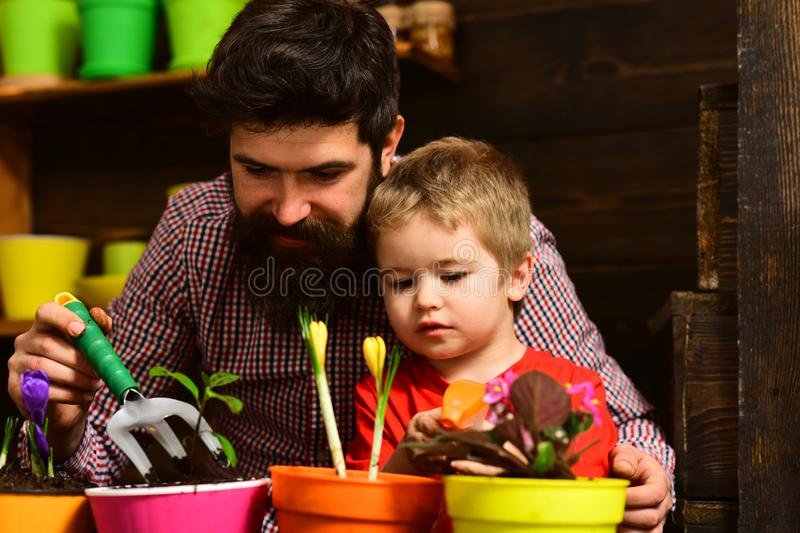 Family day. Greenhouse. bearded man and little boy child love nature. Flower care watering. Soil fertilizers. Father and. Family day. Greenhouse. bearded men and royalty free stock photography