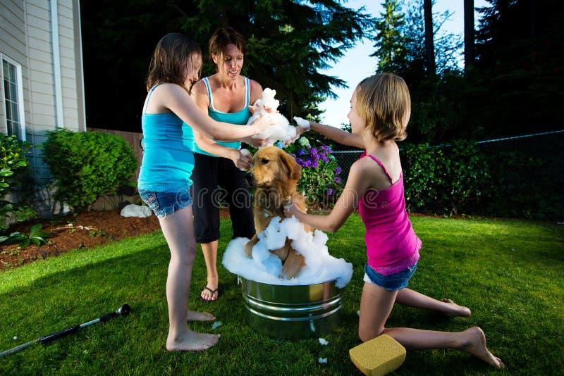 Family Dog Bath royalty free stock photo